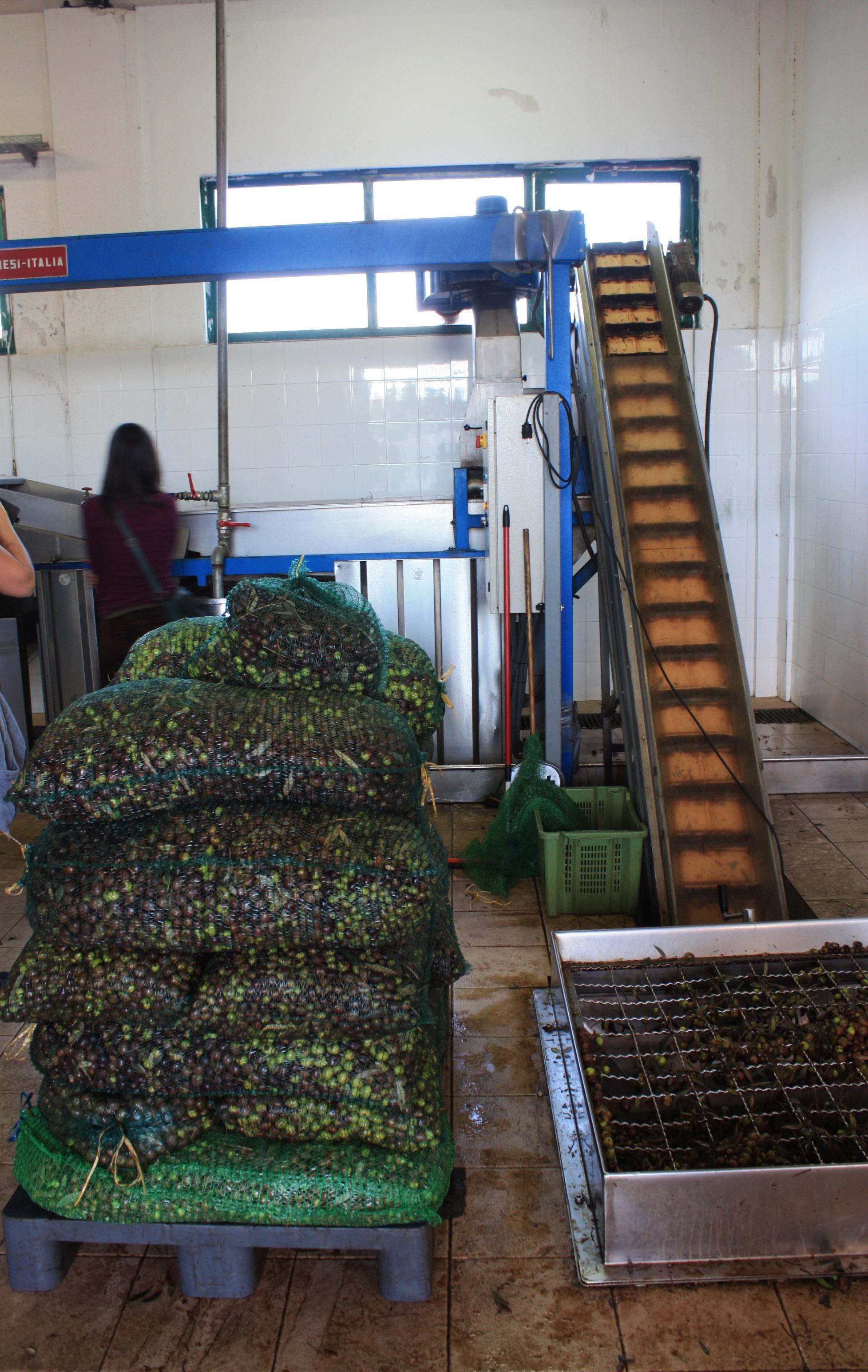 Processing olive oil in Brač